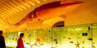 Музей природы и человека (Museo de la Naturaleza y el Hombre) получит новое название