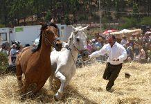 В Эль-Танке пройдет ежегодное этнографическое представление «Trilla», посвященное традиционному празднику урожая и исконным традициям местных крестьян.