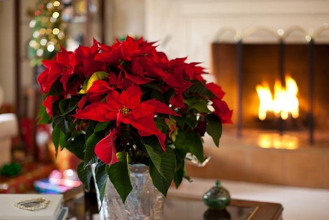 Рождественская Звезда у Вас дома