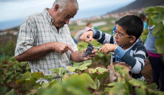 550000 евро назащиту Канарского вина отподделок