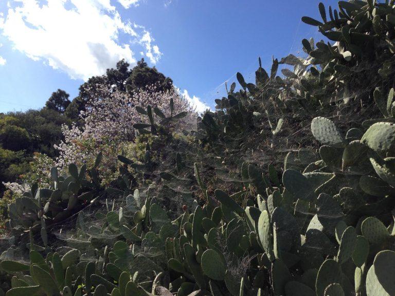 Сантьяго дель Тейде— Аргуайо незаезженный маршрут