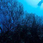 Климат канарских островов меняется