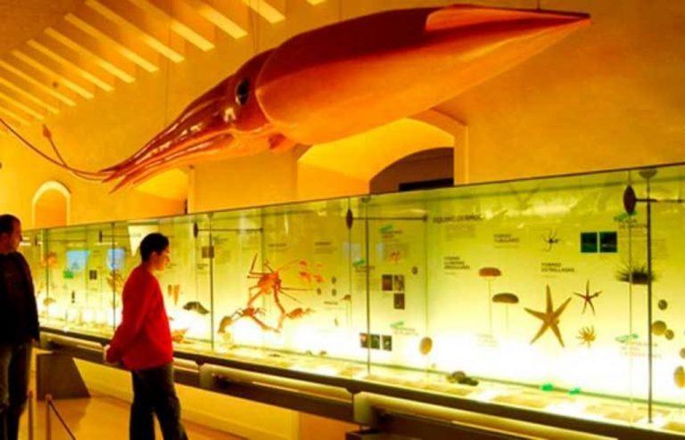 Музей природы ичеловека (Museo delaNaturaleza yelHombre) получит новое название
